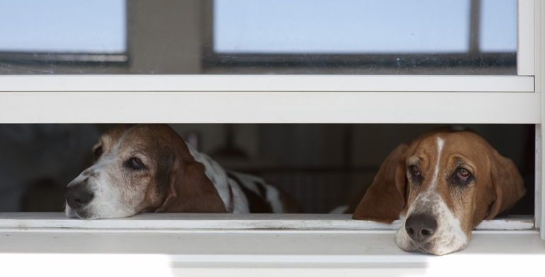 Dogs look out open window with no window covering in Cleveland.